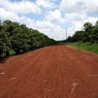 this road leads to good coffee
